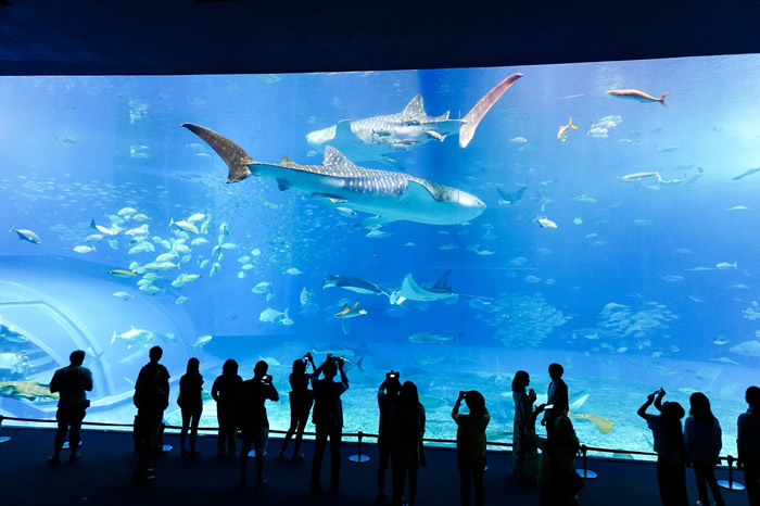 Aquarium Sea Life Londres